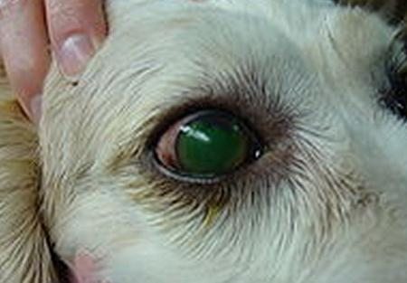Corneal Ulcer pictures 6