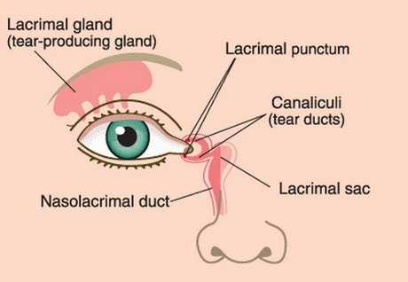 canaliculi, Nasolacrimal duct & Lacrimal apparatus