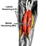 Hamstring Muscle Pic