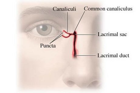 Anatomy of lacrimal apparatus